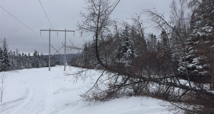 Cutting trees near power lines CAN BE FATAL